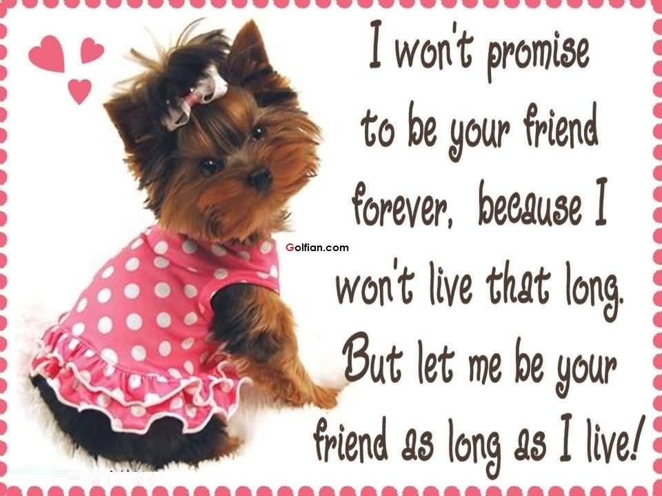 birthday greetings message for a best friend ; So-Sweet-Puppy-Birthday-Wishes-For-Best-Friends