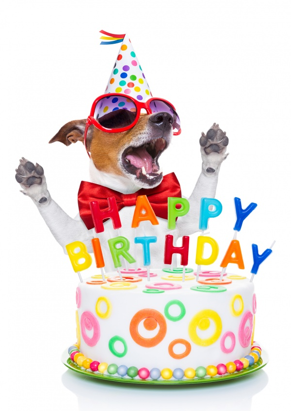 birthday pictures images ; dog-cake-happy-birthday-postcard-greeting-card-send-online-2637_57