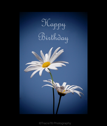 birthday wishes greeting cards ; 302686