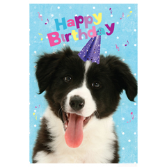 border collie birthday ; 3ca92e454eb8056cba91d8bed7085c57