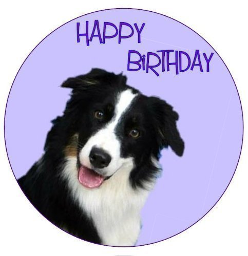 border collie birthday ; 4167OiUVQFL