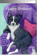 border collie birthday ; 675167_TN_shadow
