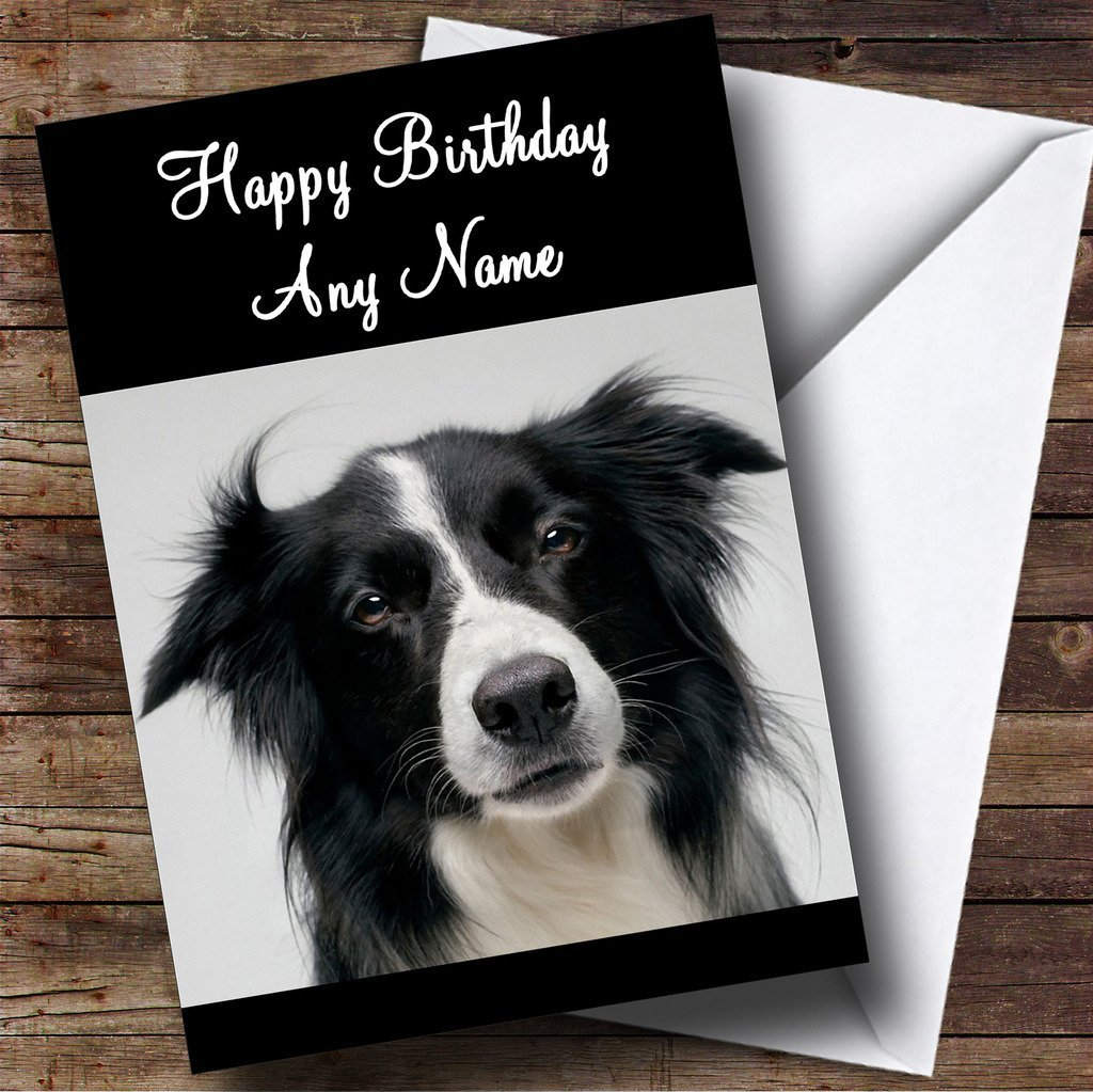 border collie birthday ; 71-dCVEtxjL