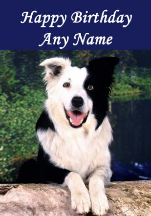 border collie birthday ; border-collie-dog-birthday-card-49-p