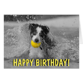 border collie birthday ; border_collie_dog_birthday_card-re500ebeeb18648e19c17536dd8a8dd0c_xvuak_8byvr_324