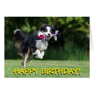 border collie birthday ; border_collie_dog_birthday_card-rec4afc9d237f44d0baac4a2a5b83e0fe_xvuak_8byvr_400