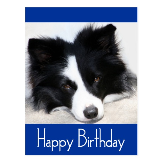 border collie birthday ; happy_birthday_border_collie_puppy_dog_post_card-r3fccc0ad2f964b319823b83f147c6d21_vgbaq_8byvr_540