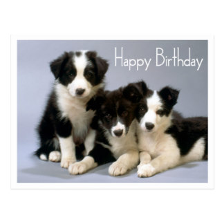 border collie birthday ; happy_birthday_border_collie_puppy_dog_post_card-rac37b29d4b444aafa25653cfe4dcee13_vgbaq_8byvr_324