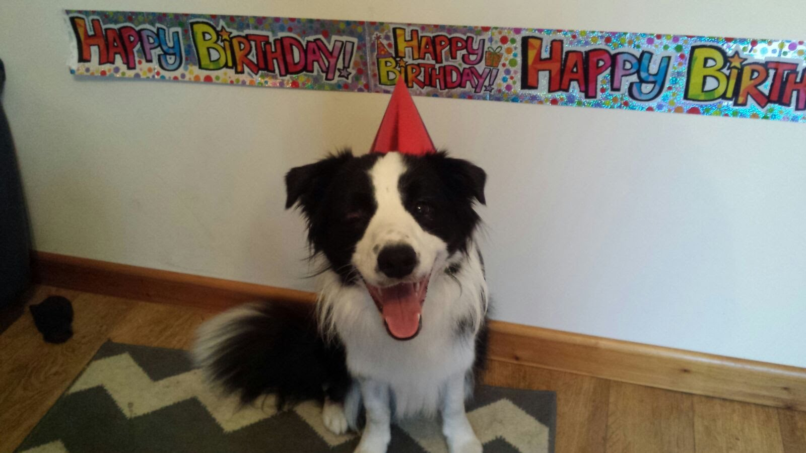 border collie birthday ; maxresdefault