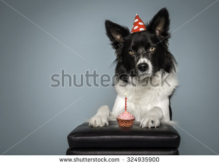 border collie birthday cake ; stock-photo-border-collie-dog-birthday-with-cake-and-hat-on-a-blue-background-324935900