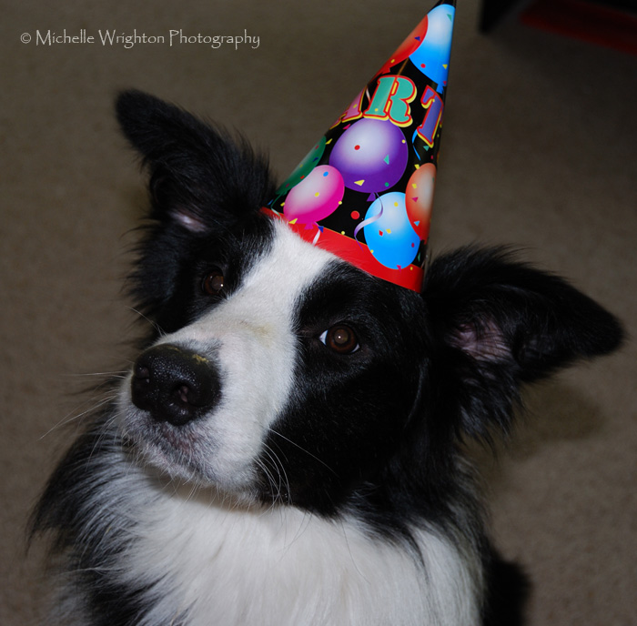 border collie birthday images ; 2719084697_cc3fa3a16c_o