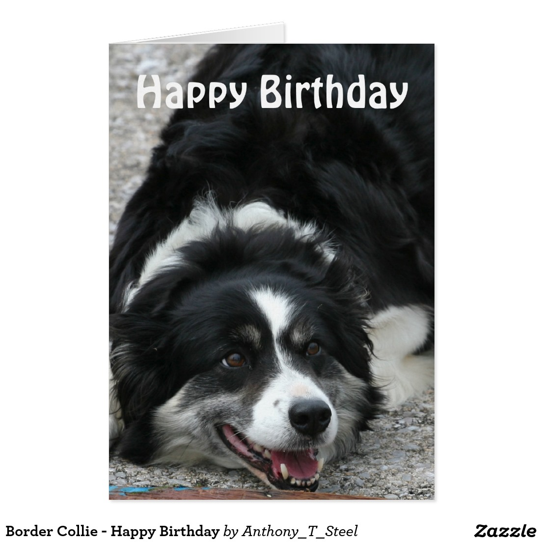 border collie birthday images ; 333db4df1e466d2806d1b0198b885d27