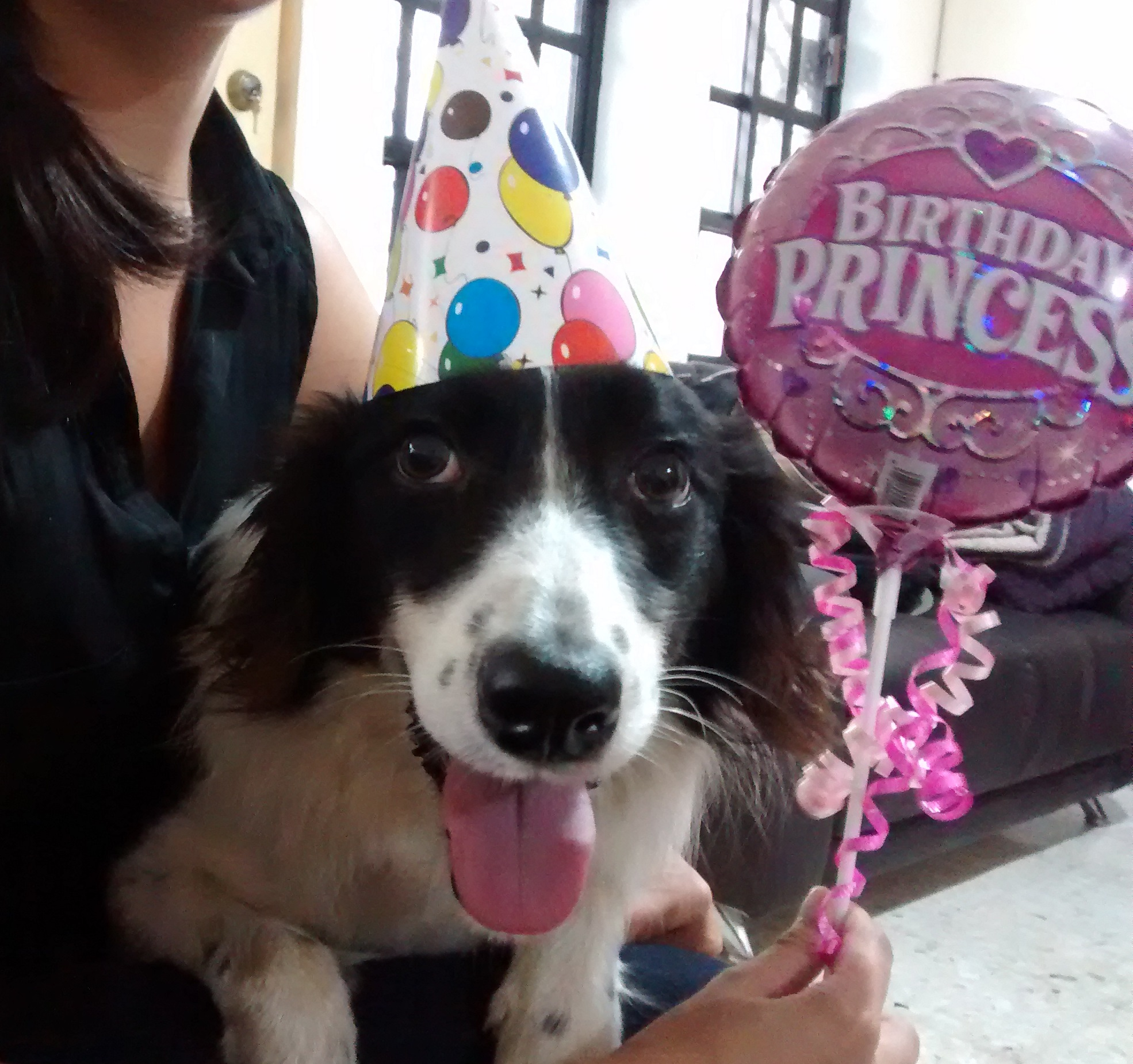 border collie birthday images ; ZzknyRu