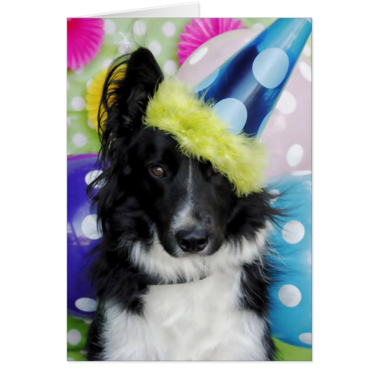 border collie birthday images ; border_collie_birthday_card-rc130e4e751b74d279845c8b01e4ffeea_xvuat_8byvr_540