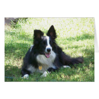 border collie birthday images ; border_collie_greeting_card-rd6d8c6aed04341a6be04148f40adf048_xvuak_8byvr_324