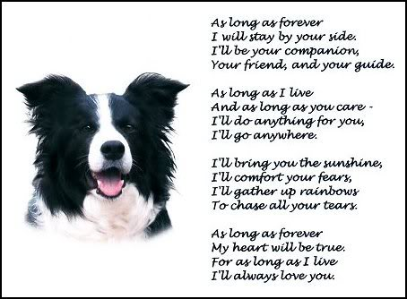 border collie birthday images ; fc5a80647cecc62c26744e89709ec7df