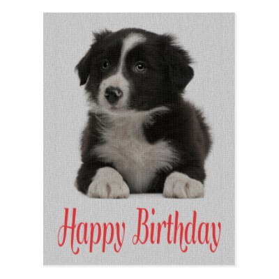 border collie birthday images ; happy_birthday_border_collie_puppy_dog_post_card-rcd3a7bc3ab5c4d66bf0a3bdfddc31556_vgbaq_8byvr_400