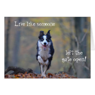 border collie birthday images ; happy_border_collie_dog_birthday_card-r09be1a708e5b4bcda4529ac465d8d7be_xvuak_8byvr_324