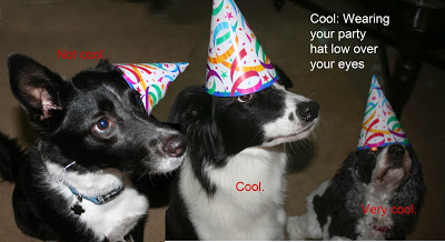border collie birthday images ; not+jakes+day