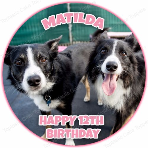 border collie birthday images ; s-l500