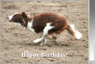 border collie birthday pictures ; 202870_TN_shadow