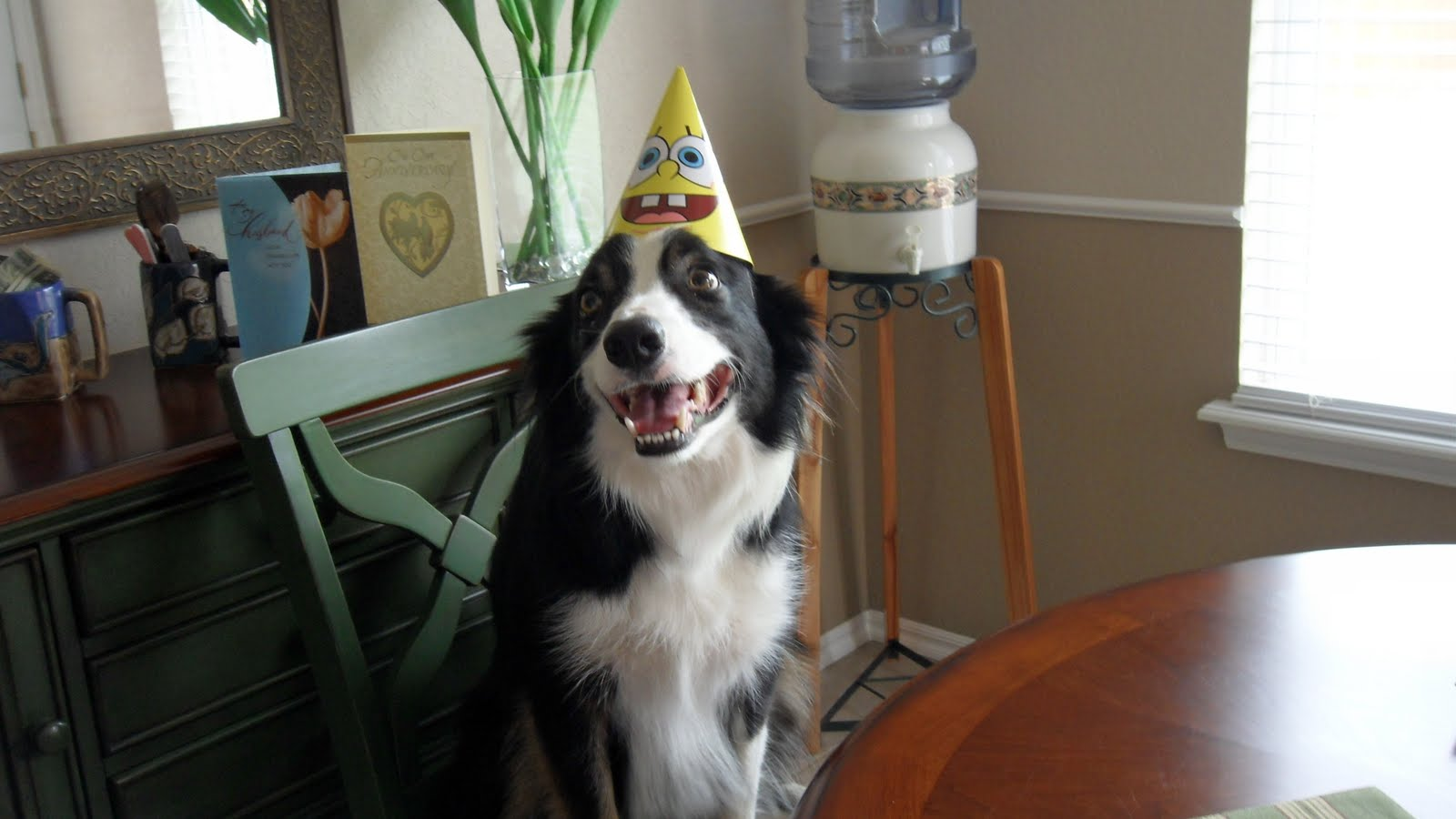 border collie birthday pictures ; Susan%2527s+Camera+259