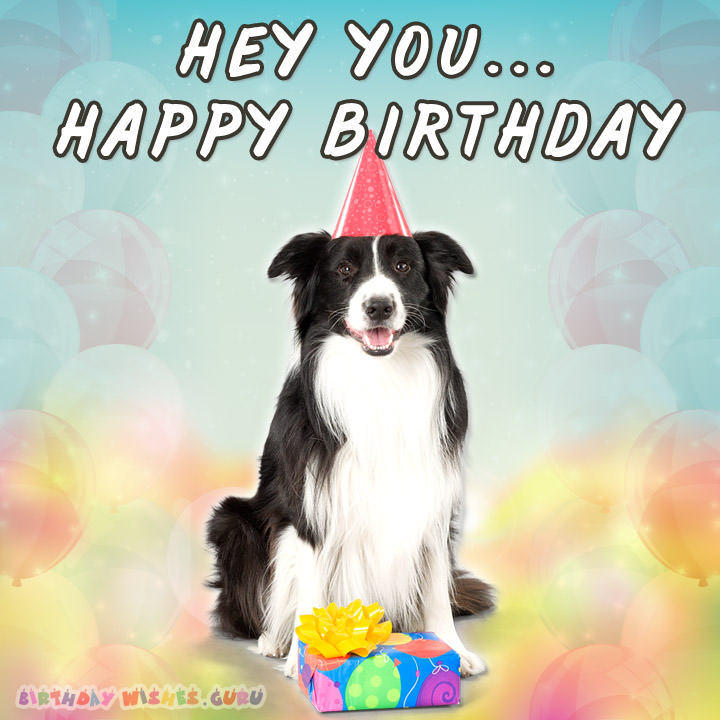border collie birthday pictures ; Sweet-Friend-Birthday-Wishes-Images