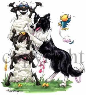 border collie birthday pictures ; border_col_toon2
