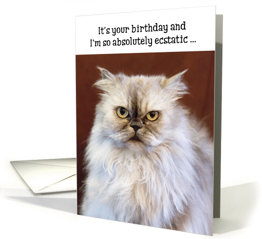 cat birthday greeting images ; 1370848-1_3d