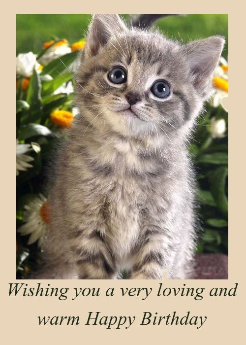 cat birthday greeting images ; 5279833e2f902410c5f82a42f78bee29--cat-birthday-cards-happy-birthday-wishes