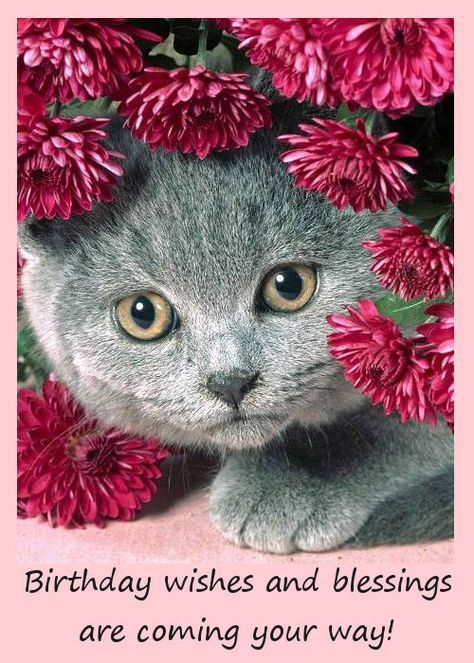 cat birthday greeting images ; 5652f43628e4e860d78a14aae35babe2