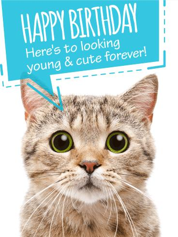 cat birthday greeting images ; bf_b_day29-b332d00dfe3550ea07e7faca4573051d