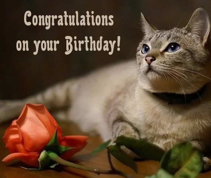cat birthday greeting images ; birthday_cards_with_cats1
