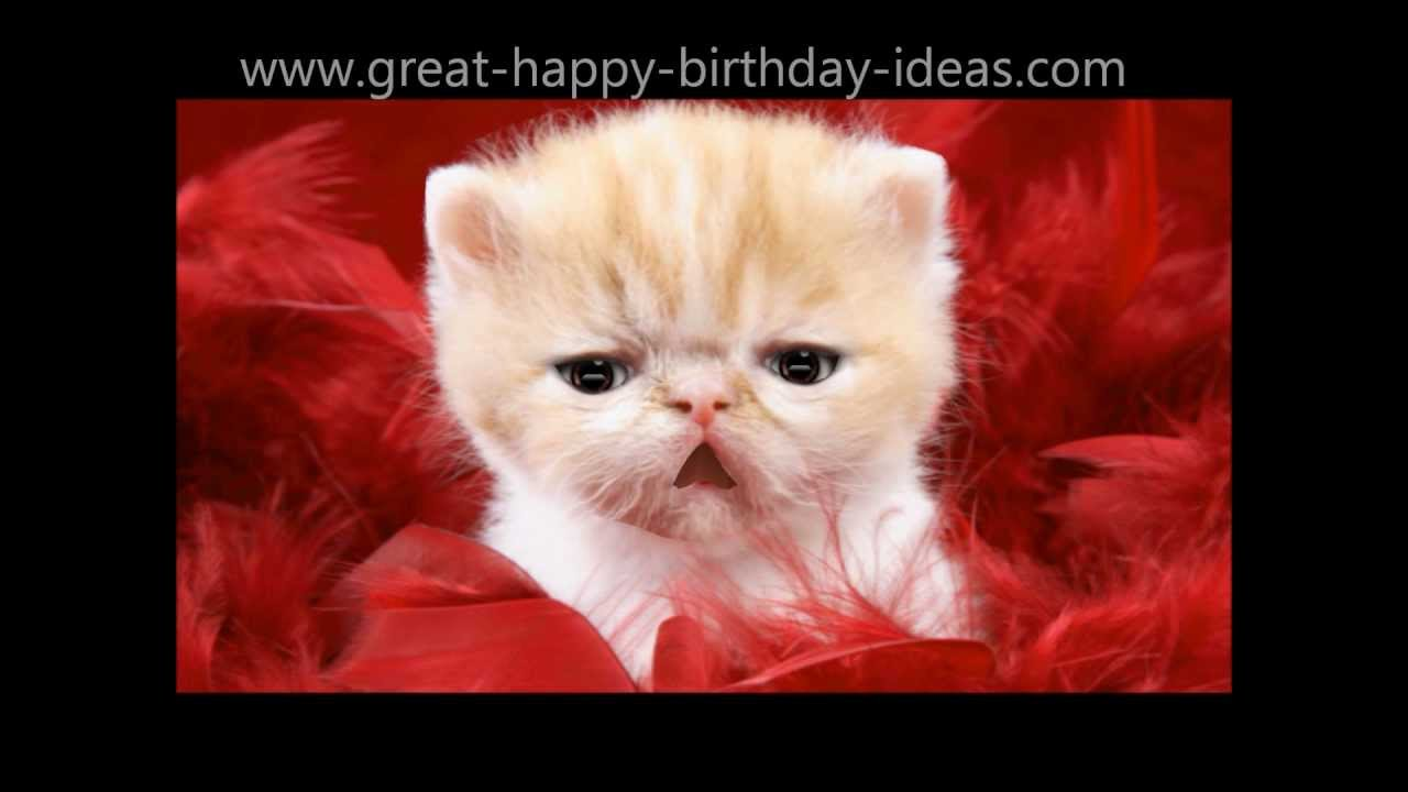 cat birthday greeting images ; maxresdefault