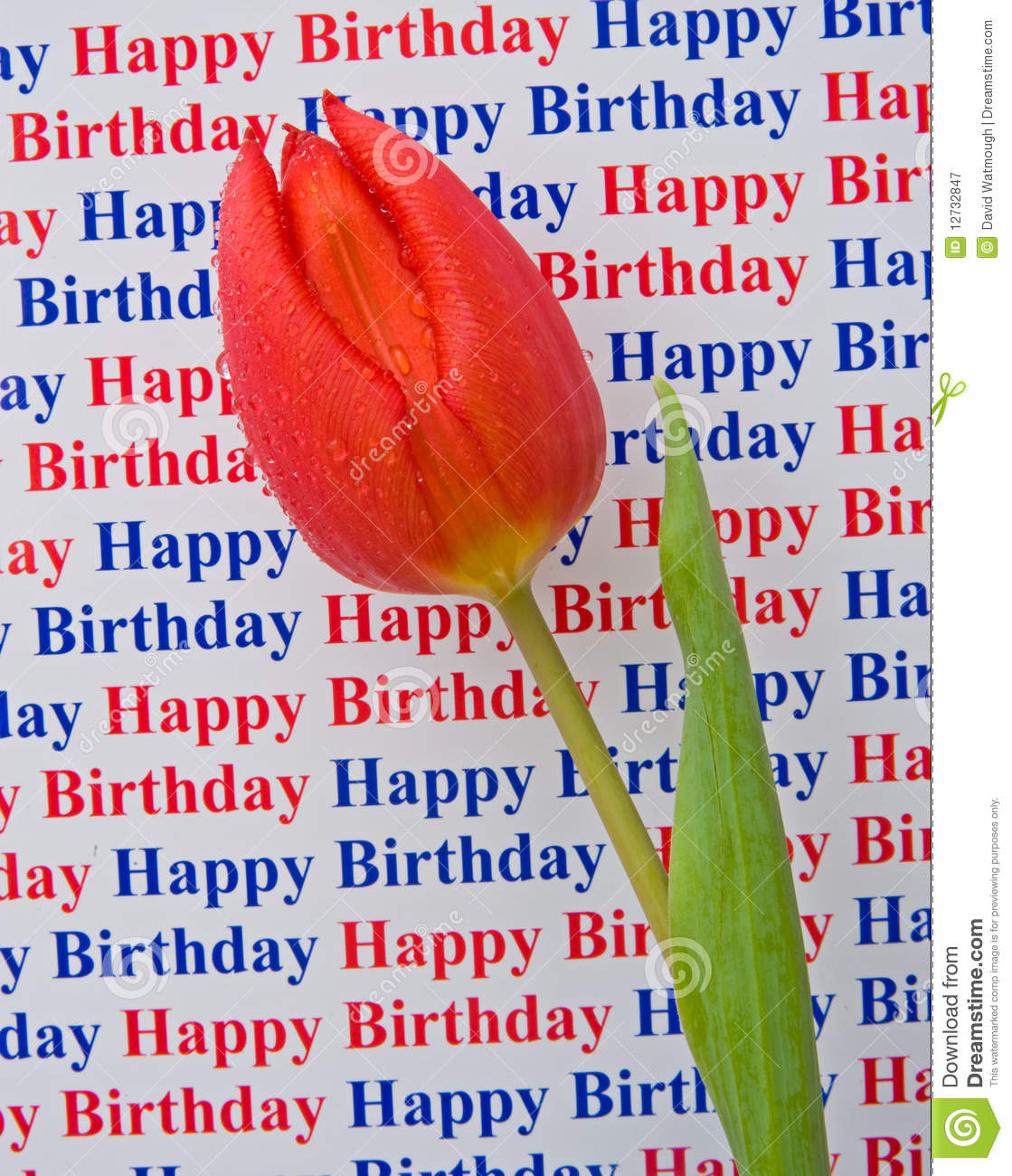 happy birthday picture message free download ; happy-birthday-special-message-tulip-12732847