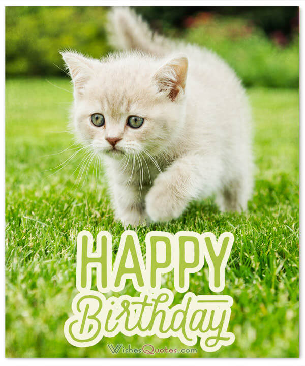 birthday wish pictures for friend ; happy-birthday-wish-cute-cat