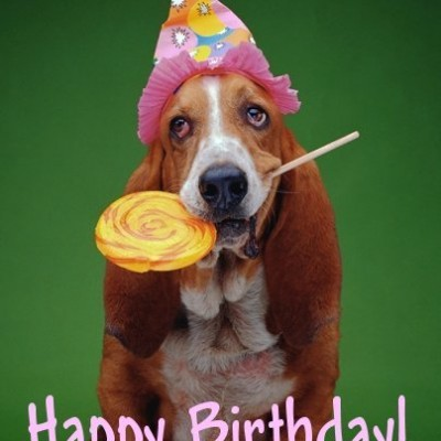 birthday wishes with dog picture ; 0950b880a703c112ae28ca894ed171bf