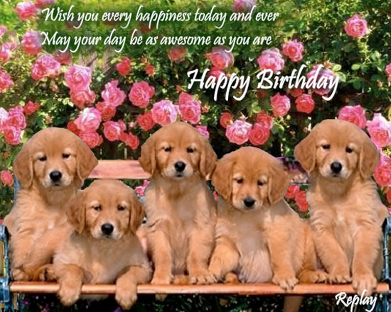 birthday wishes with dog picture ; 151f27a6039002177384e0b75f0862a7