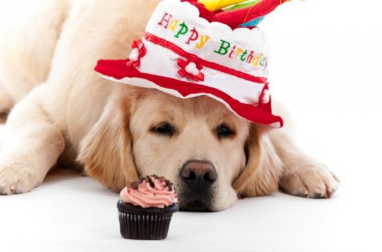 birthday wishes with dog picture ; Birthday-Wishes-With-Dog-11