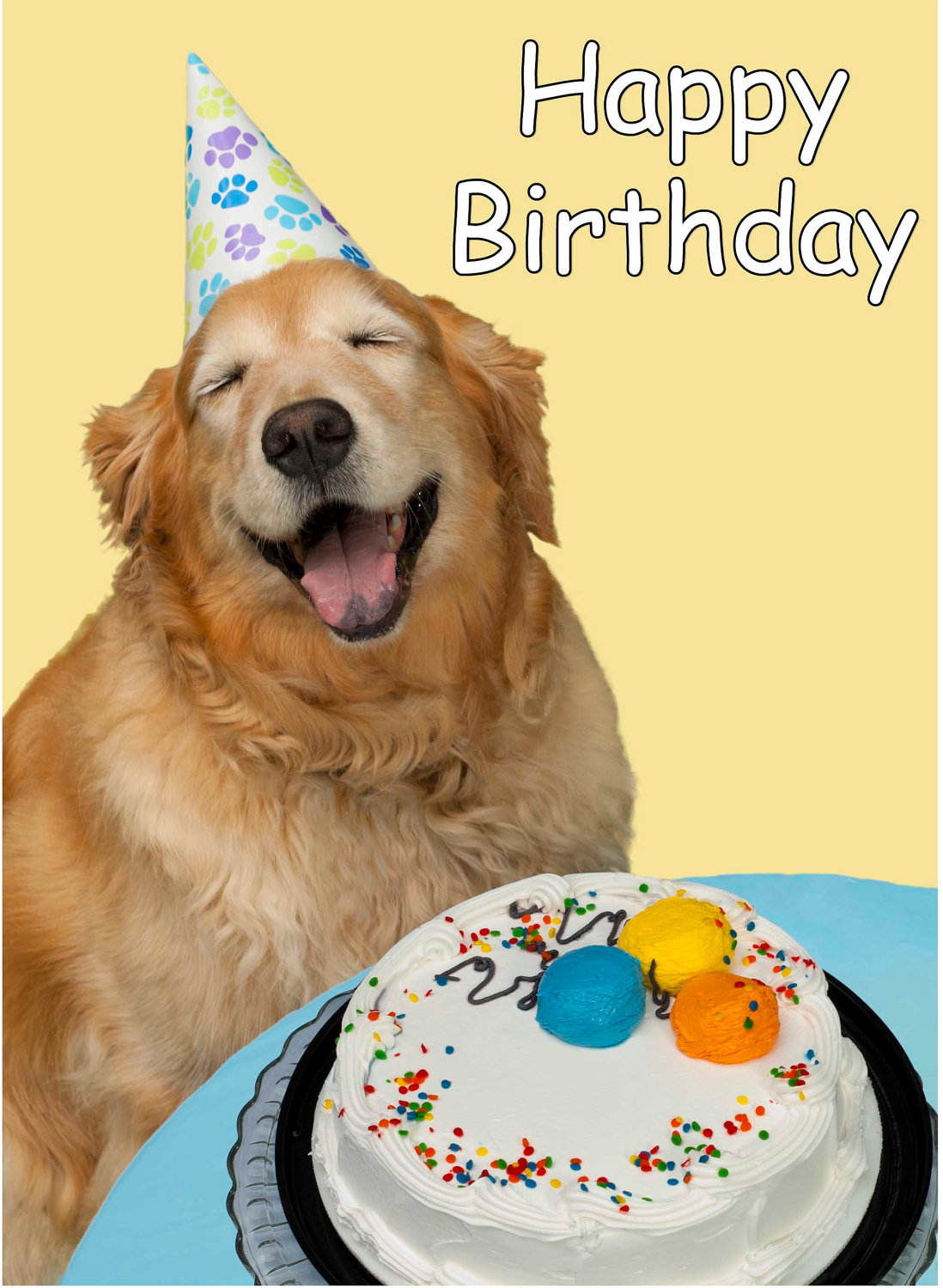 birthday wishes with dog picture ; Happy-Birthday-Wishes-Funny-Dog-Picture