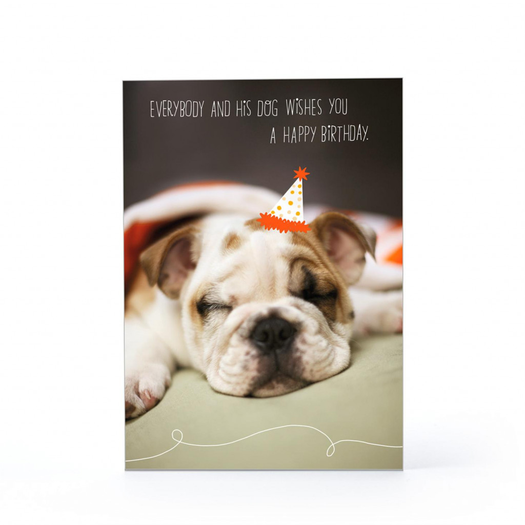 birthday wishes with dog picture ; best-of-birthday-wishes-for-pets-dog-birthday-wishes-dog-birthday-cards-of-happy-birthday-images-with-dogs