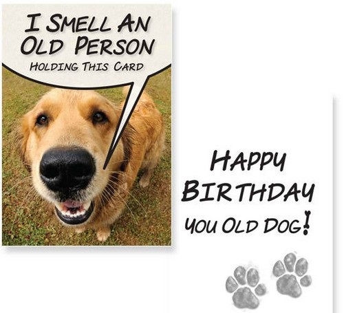 birthday wishes with dog picture ; birthday_wishes_for_a_dog_lover5