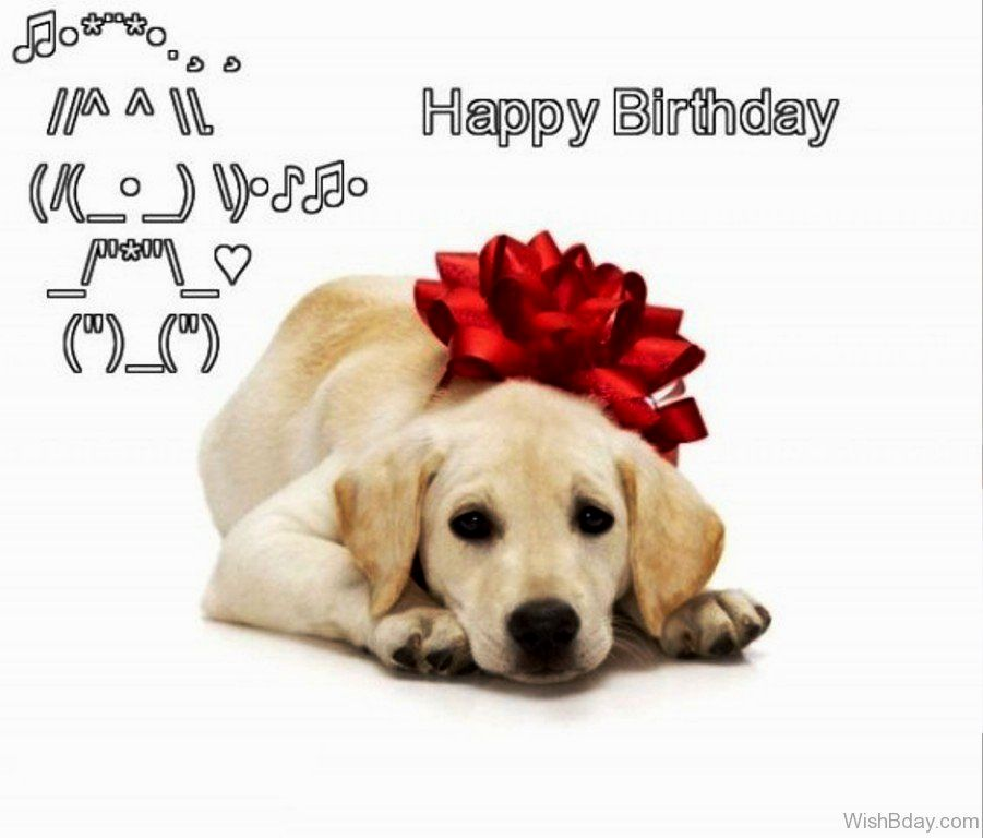 birthday wishes with dog picture ; cute-dog-birthday-wishes-image-unique-dog-birthday-wishes-inspiration