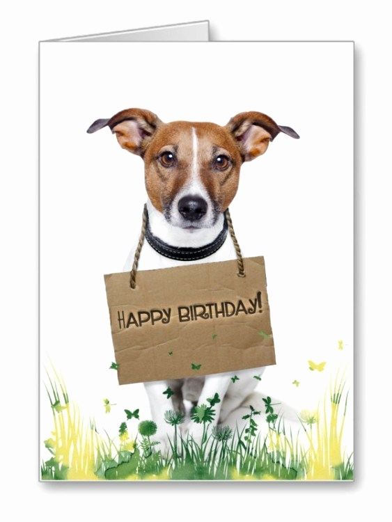 birthday wishes with dog picture ; happy-birthday-wishes-dog-awesome-adorable-birthday-wishes-with-dog-s-wishmeme-of-happy-birthday-wishes-dog