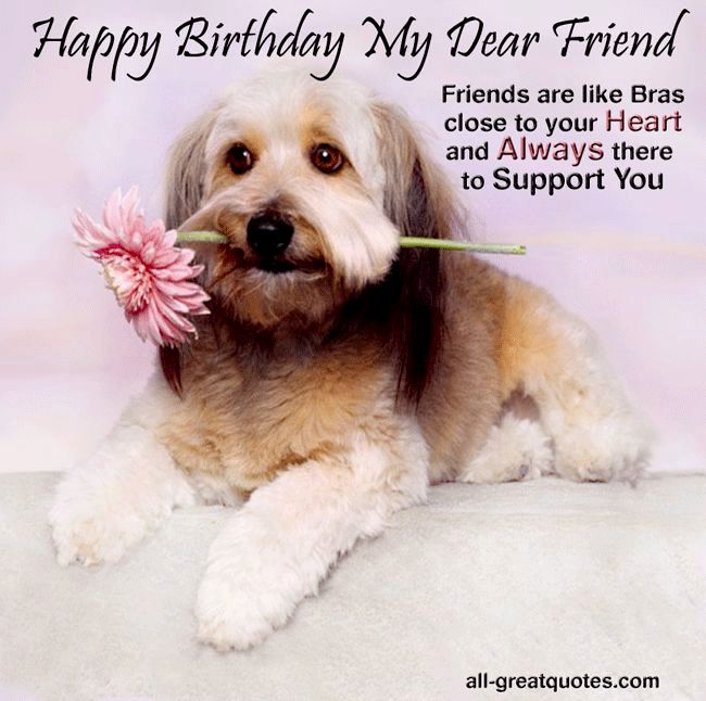 birthday wishes with dog picture ; lovely-dog-birthday-wishes-ideas-unique-dog-birthday-wishes-inspiration