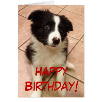 border collie happy birthday images ; birthday_border_collie_puppy_greeting_card-r7d0c04c7a3d94e3ab74cbc4726f7ab32_xvuat_8byvr_400