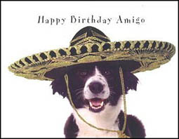 border collie happy birthday images ; border_collie_card_1