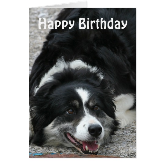 border collie happy birthday images ; border_collie_happy_birthday_card-r7fc330fadbbf4bd48a7c0eb332eece1c_xvuat_8byvr_540