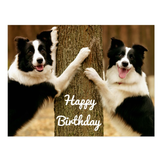 border collie happy birthday images ; happy_birthday_border_collie_puppy_dog_rustic_postcard-r395b78a6418f40318eba29b777e6adca_vgbaq_8byvr_540