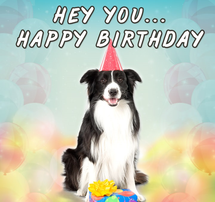 border collie happy birthday images ; hey-you-happy-birthday-678